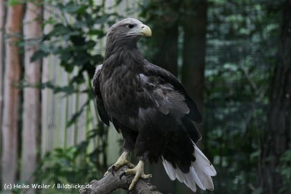 Zoo_Rostock_310712_153