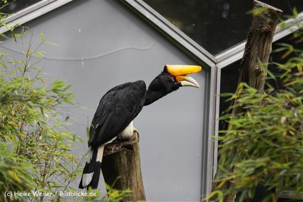 Zoo_Rostock_310712_209