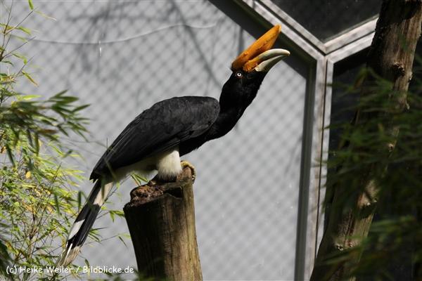 Zoo_Rostock_310712_213