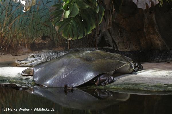 Zoo_Rostock_310712_312