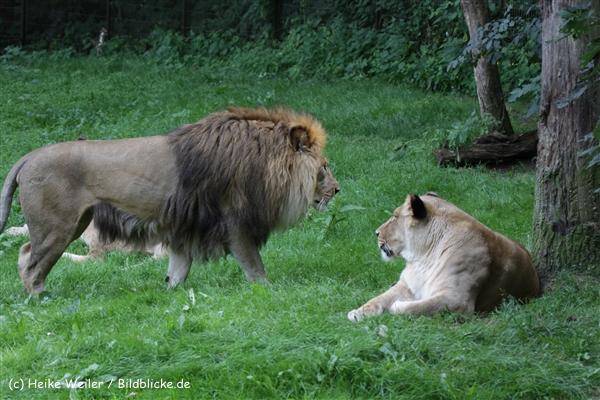 Zoo_Rostock_310712_340