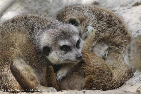 Zoo_Rostock_310712_372