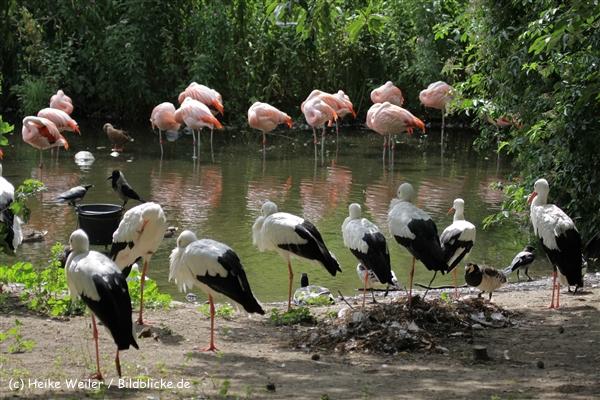 Zoo_Rostock_310712_400