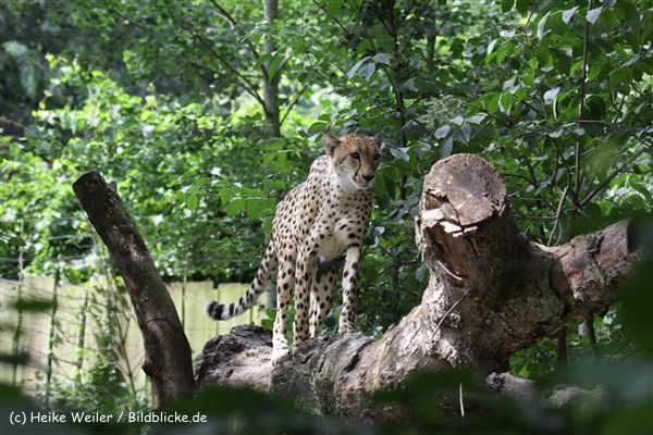 Zoo_Rostock_310712_402