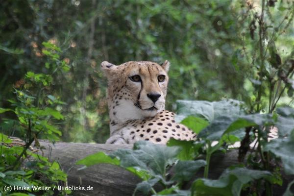 Zoo_Rostock_310712_424
