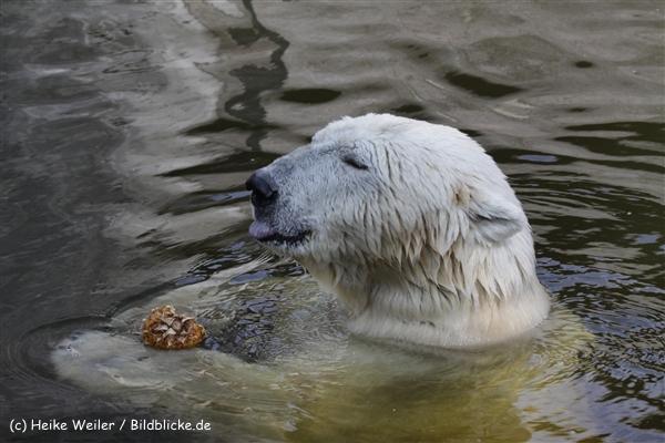 Zoo_Rostock_310712_457
