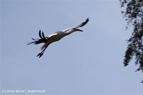 Zoo_Rostock_310712_494