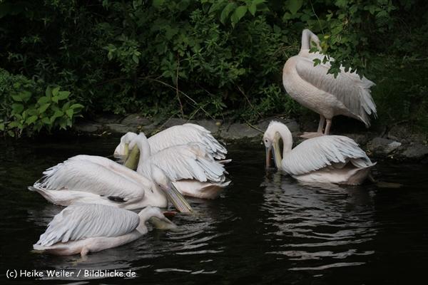 Zoo_Rostock_310712_511