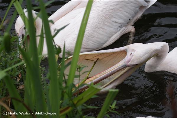 Zoo_Rostock_310712_516