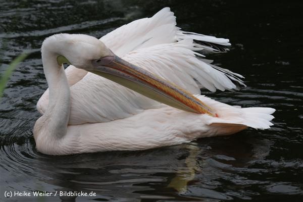 Zoo_Rostock_310712_528