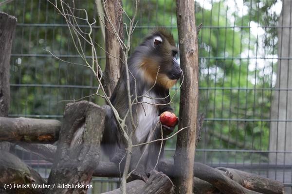 Zoo_Rostock_310712_597