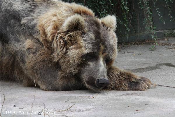 Zoo_Rostock_310712_604