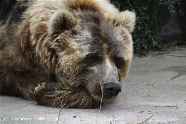 Zoo_Rostock_310712_607
