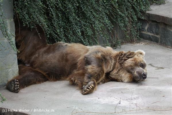 Zoo_Rostock_310712_609
