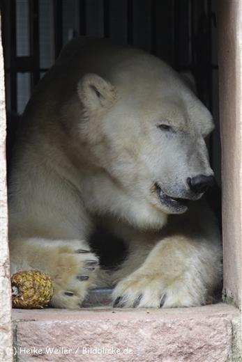 Zoo_Rostock_310712_624