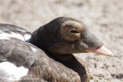 Zoo_Rostock_310712_038