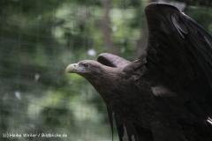 Zoo_Rostock_310712_105