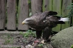 Zoo_Rostock_310712_108