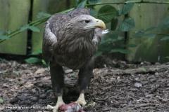 Zoo_Rostock_310712_113