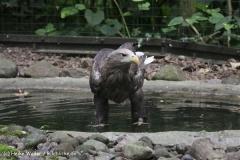 Zoo_Rostock_310712_130