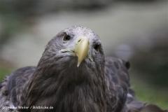 Zoo_Rostock_310712_137