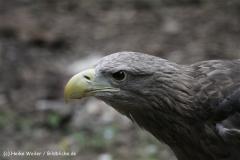 Zoo_Rostock_310712_145