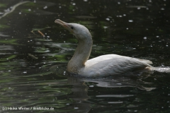 Zoo_Rostock_310712_179