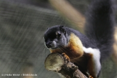 Zoo_Rostock_310712_230