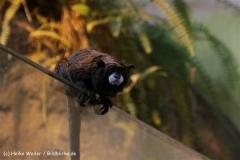 Zoo_Rostock_310712_287