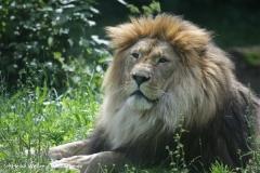 Zoo_Rostock_310712_329
