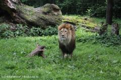 Zoo_Rostock_310712_333