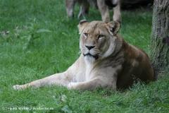 Zoo_Rostock_310712_344