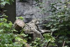 Zoo_Rostock_310712_349