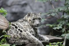 Zoo_Rostock_310712_352