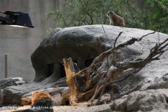 Zoo_Rostock_310712_358