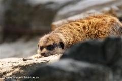 Zoo_Rostock_310712_359