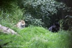 Zoo_Rostock_310712_380