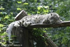 Zoo_Rostock_310712_389
