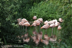 Zoo_Rostock_310712_392
