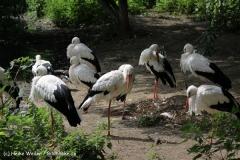 Zoo_Rostock_310712_397