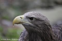 Zoo_Rostock_310712_140