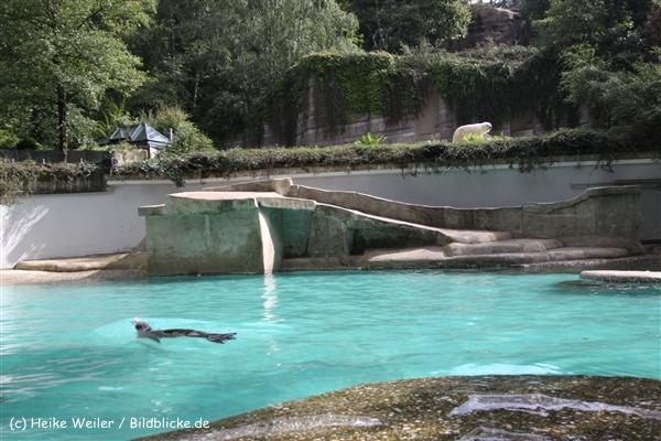 Zoo Wuppertal 040910 - IMG_1316
