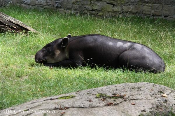 Zoo Wuppertal 040910 - IMG_1329