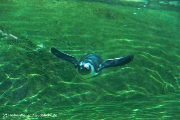 Zoo Wuppertal 040910 - IMG_1364