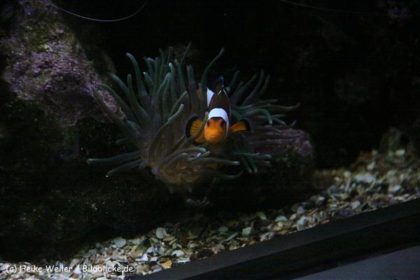 Zoo Wuppertal 040910 - IMG_1376