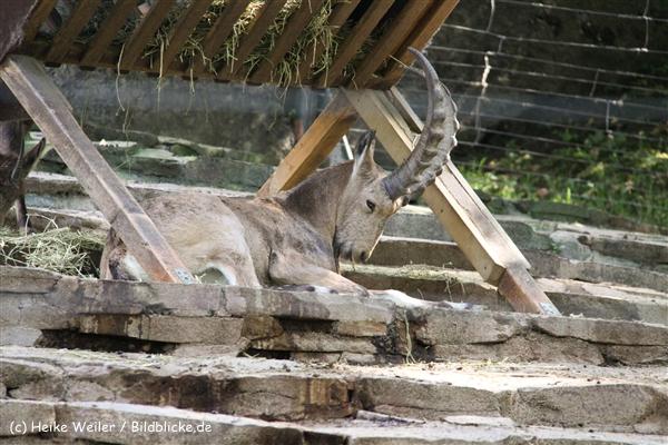 Zoo Wuppertal 040910 - IMG_1457