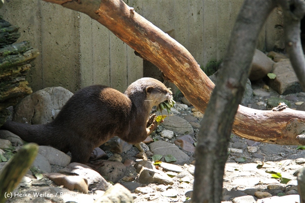 Zoo Wuppertal 040910 - IMG_1565