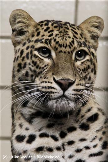 Zoo Wuppertal 040910 - IMG_1615