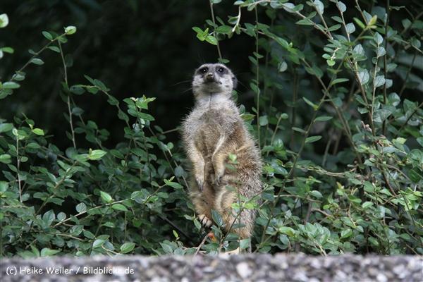Zoo Wuppertal 040910 - IMG_1622-2