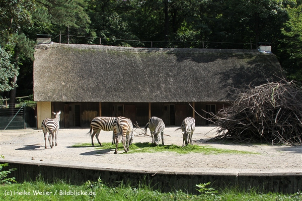 Zoo Wuppertal 040910 - IMG_1649